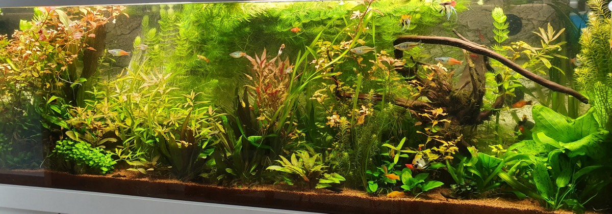 Pflanzenaquarium mit höheren Lichtansprüchen