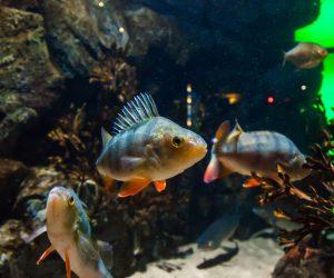 Biotop Aquarien